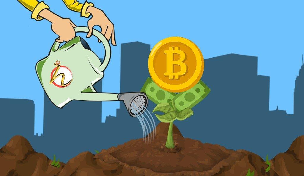 hodl, hodler, bitcoin, měsíc, bohatství, kryptohodler, hodleři, zalévat, kytka, rostlina, peníze, štěstí, hojnost, prosperita,