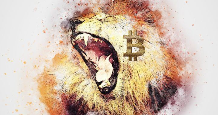 Bitcoin, král, lev, společnosti, zlobí, altcoiny, sezóna, kryptoměny, HODL