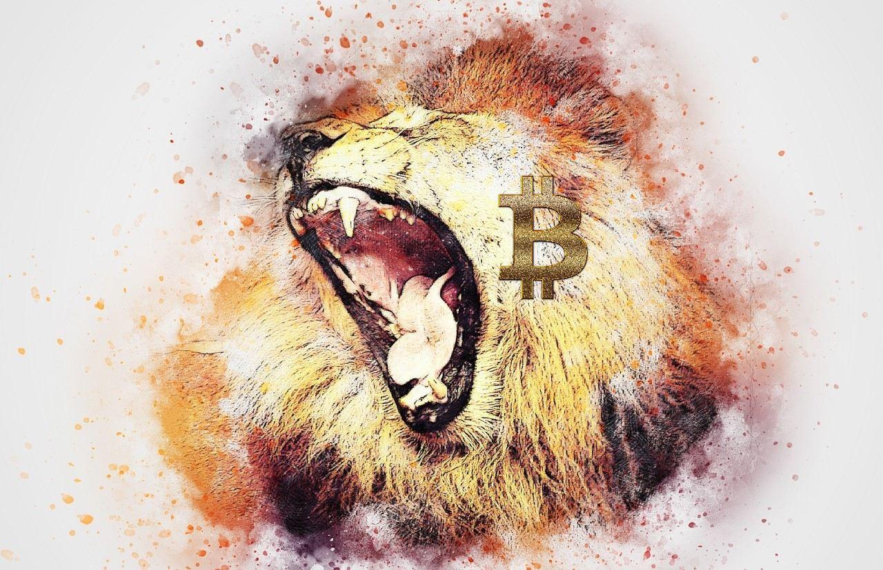 Bitcoin, král, lev, zlobí, altcoiny, sezóna, kryptoměny, HODL