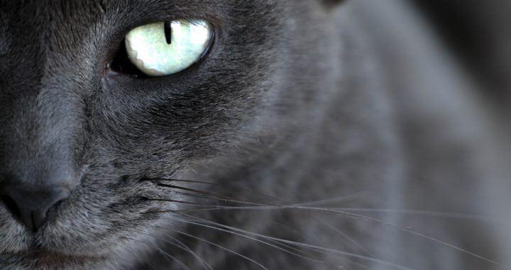 sppn, smysl, blockchain, kočka, oko, zprávy, kryptohodler