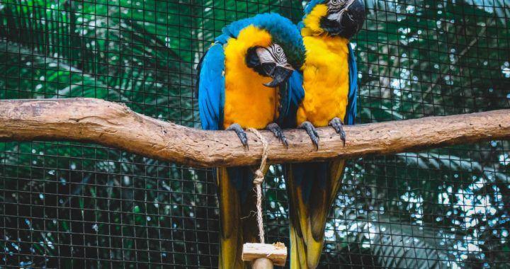 Brazílie, kód, krypto, papoušek