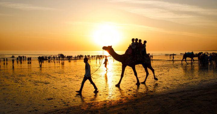 Indie, Indii, Indická, zákaz, kryptoměn, banka, slunce, velbloud