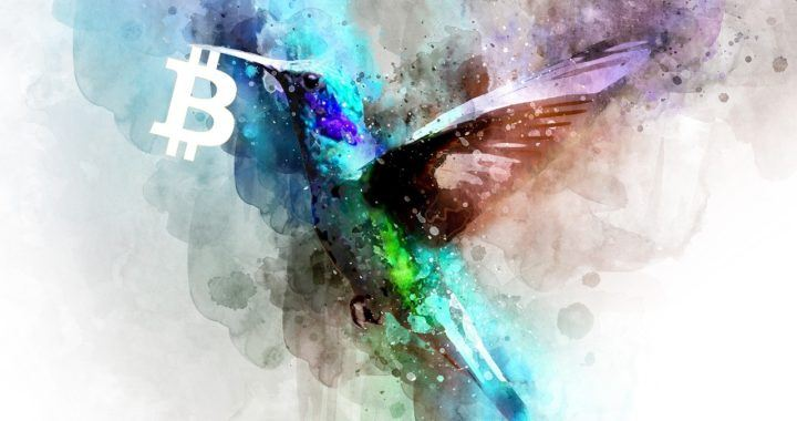 kryptonovinky, Bitcoin, facebookovinky, bird, pták