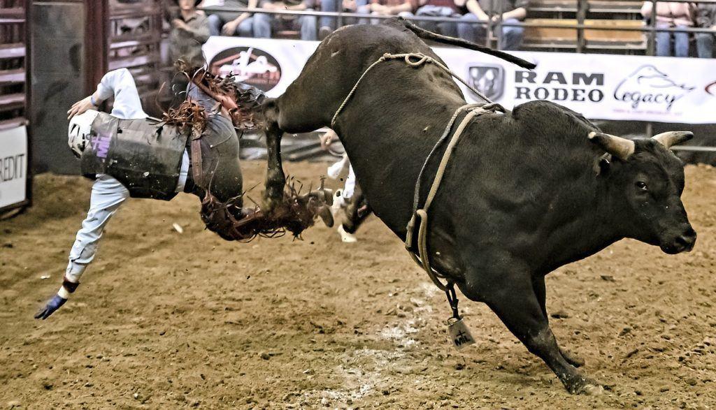 BULL, růst, býk, oživení, trhy, bull market