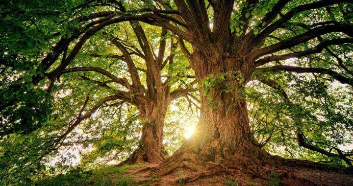krása, slunce, strom, bohatství, zdraví, koronavirus