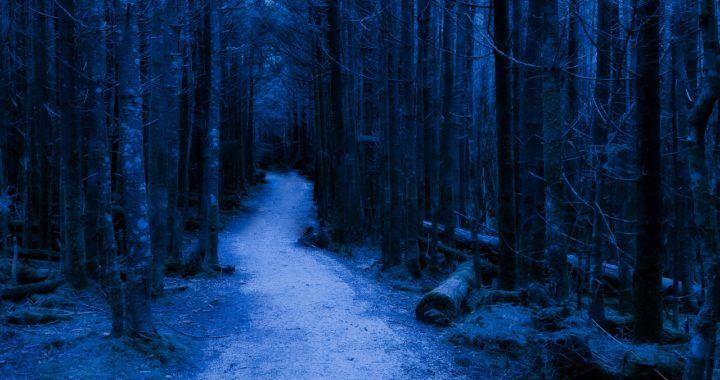 relaxace, meditace, klid, les, odpočinek, konečně