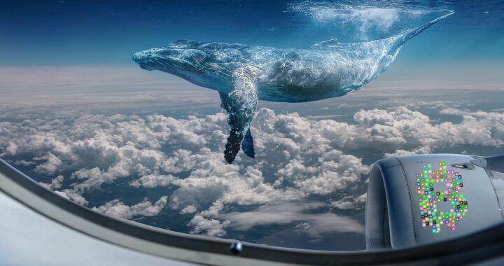 velryba, velrybí, whale, fantasy, oblaka, high