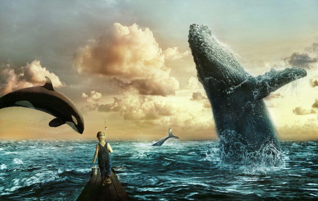 whales, velryby, instituce, moře, oceán, plankton