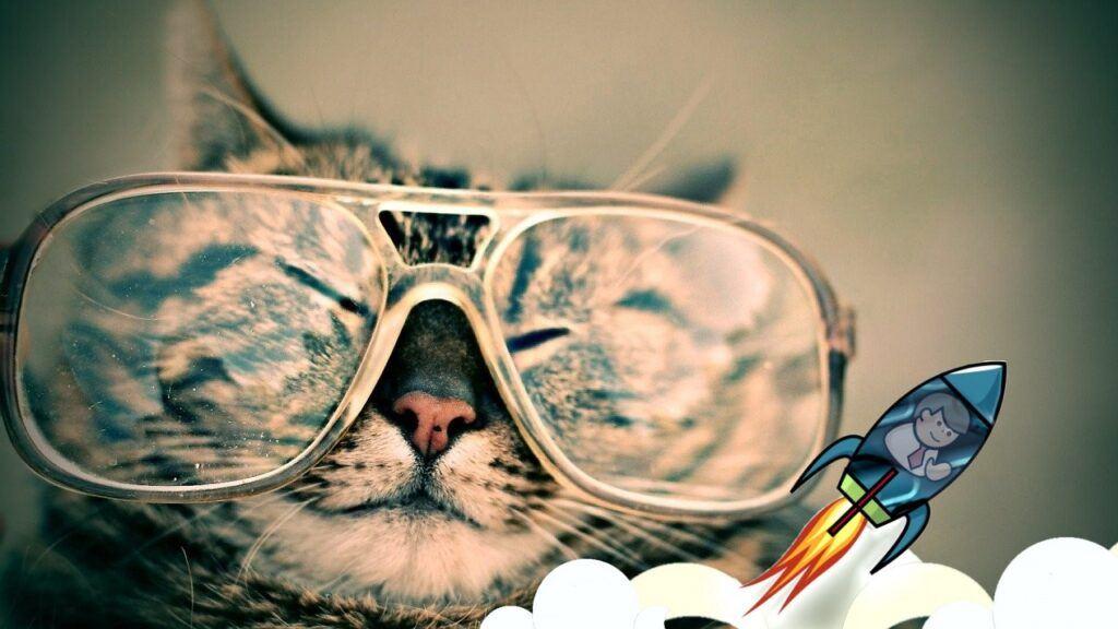 nezbláznit, jak, fomo, raketa, kočka, chill